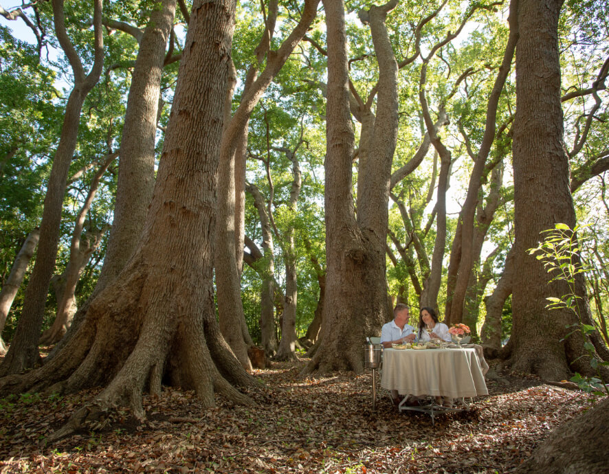 Couple having a picnic at Vergelegens forest picnic
