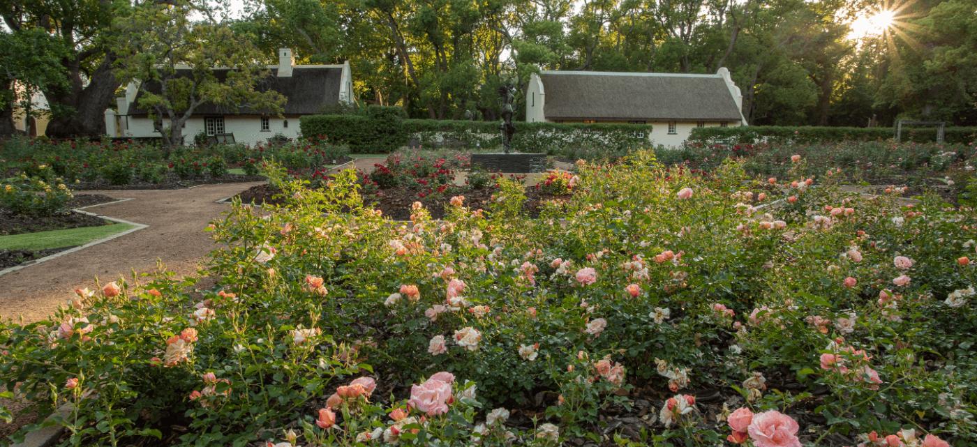 Rose garden at Vergelegen