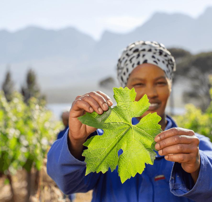 Vegelegen worker holding a leaf